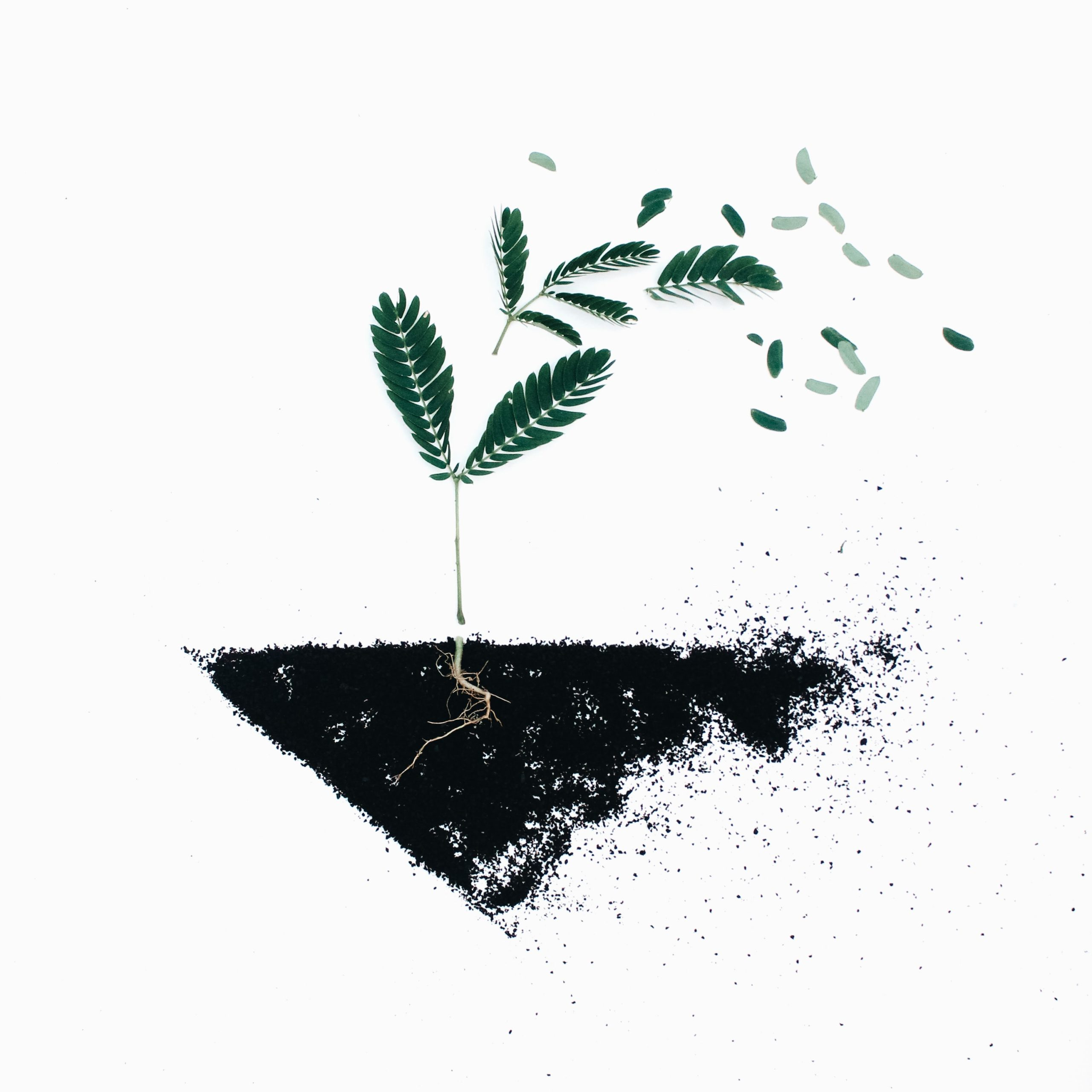 Photo showing a green leaf on black soil, by Evie S. on Unsplash